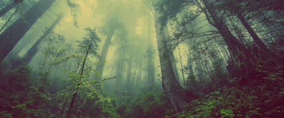 sensitive-forest-931706_1920